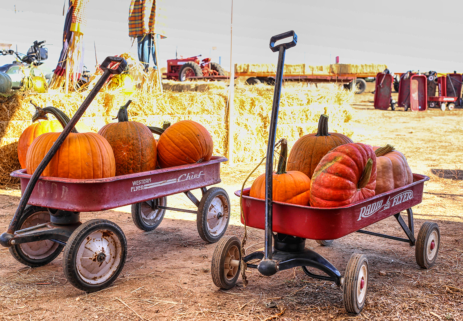 Pumpkin patch wagons